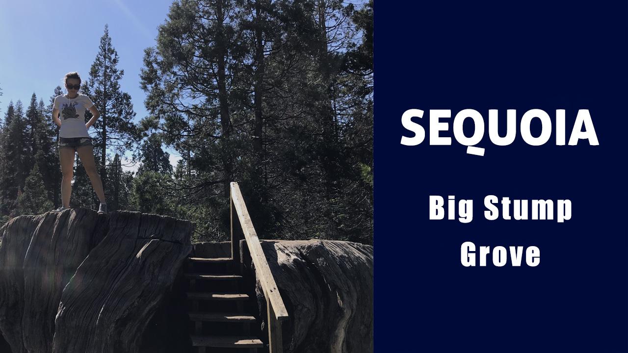 Секвойя парк: памятник жестокости к природе - Big Stump Trail