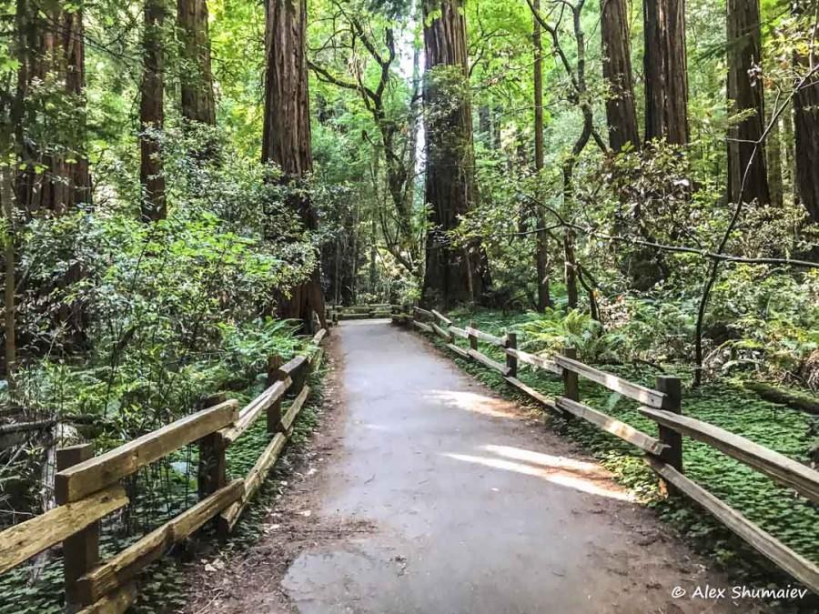 Muir Woods - сказка около Сан-Франциско