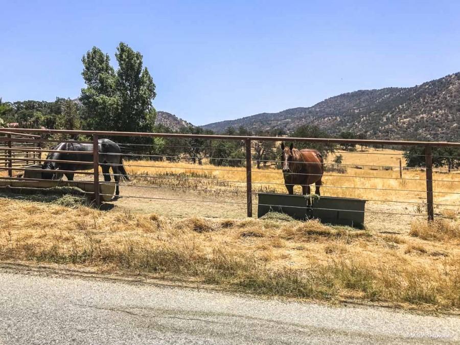 Three Rivers, Sequoia - второй опыт аренды дома в AirBnb